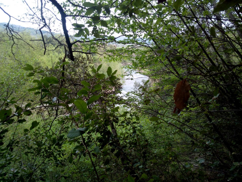 Arno visto dal sentiero 47