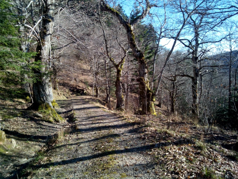 Badia Prataglia - Strada forestale che porta a Campo dell'agio