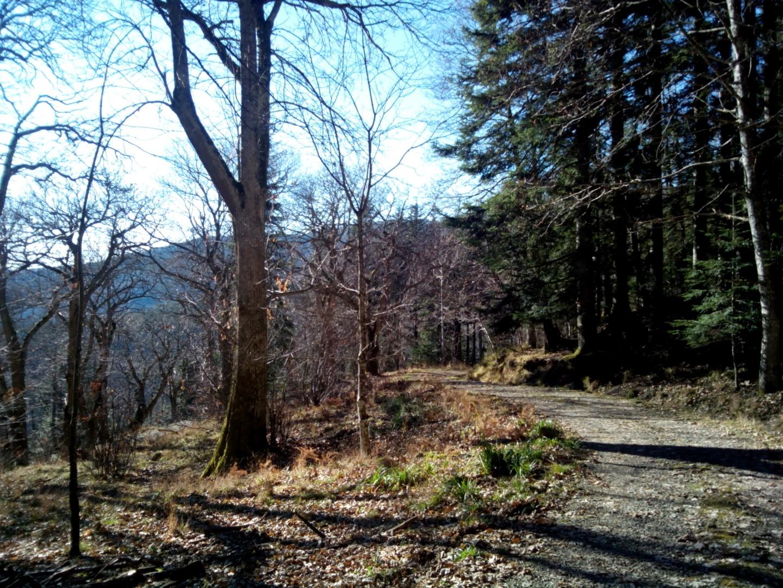 Badia Prataglia - Campo dell'Agio - Strada sterrata