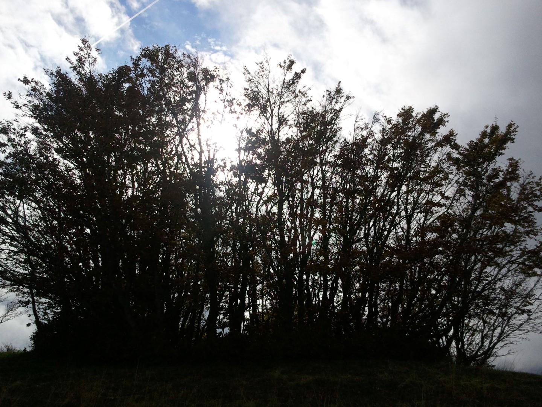Escursione alla croce del pratomagno: alberi sul crinale