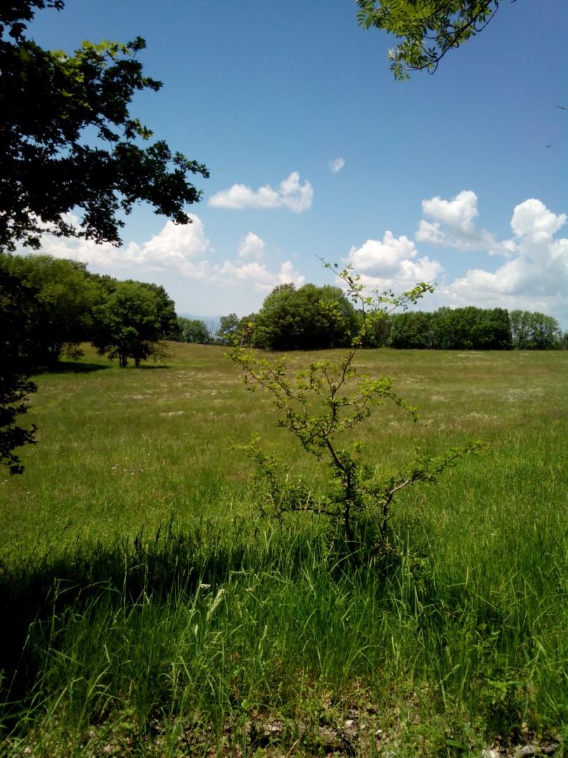 Prati erbosi vicino alla Beccia (Eremo della Verna)