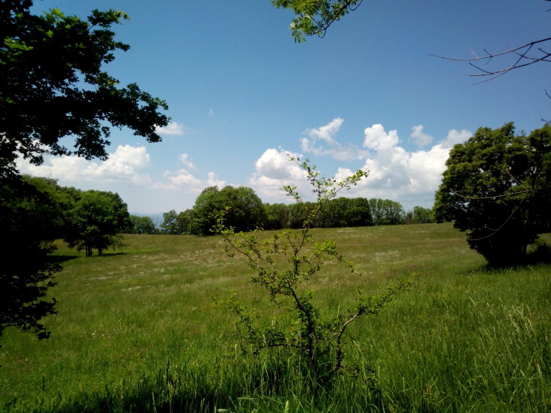 Prati nei pressi della Verna, si trovano vicino alla Beccia.