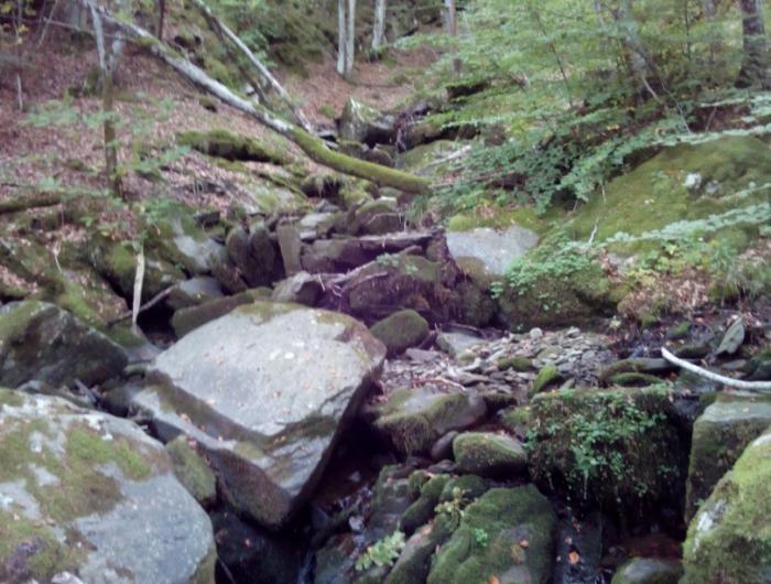 Foresta di Montemignaio sotto il Monte secchieta