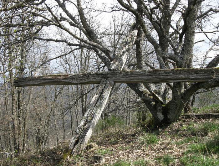 Immagine della croce del Monte Favalto - Rocca montanina - Monte Dogana Arezzo