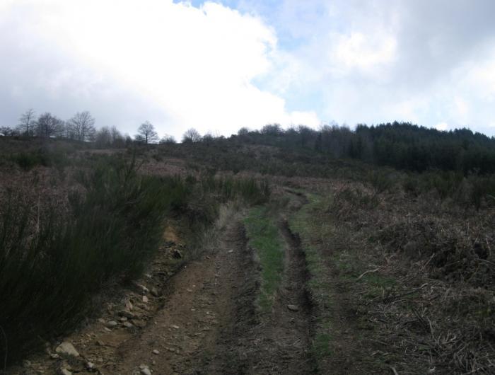 La salita al Monte Favalto