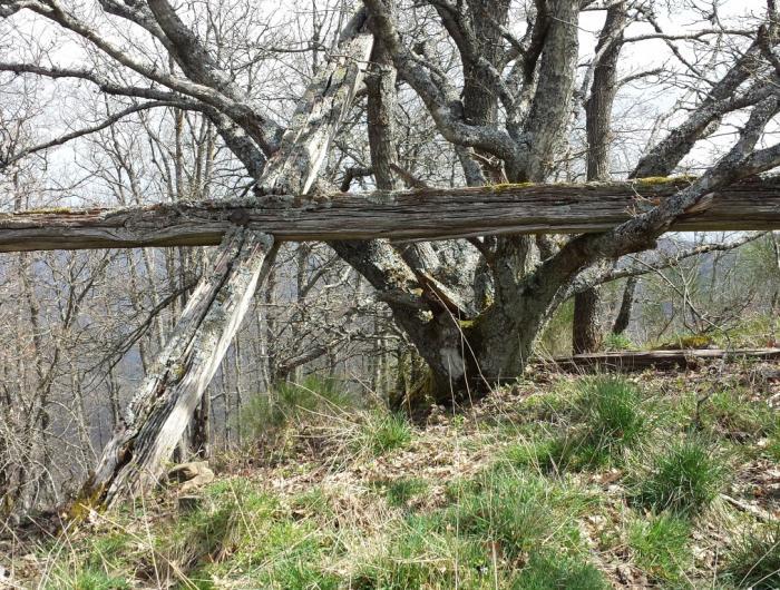 Monte Favalto: la foto della croce demolita dalle intemperie