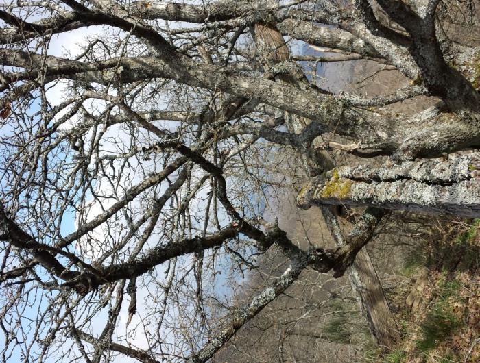 Monte Favalto:Immagine della croce sul Monte Favalto
