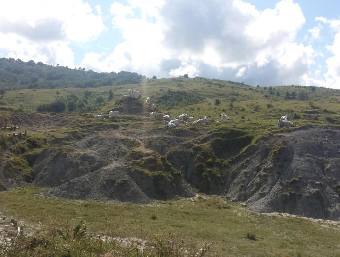 Pascoli nelle colline sopra Miratoio - Sasso di Simone e Simoncello