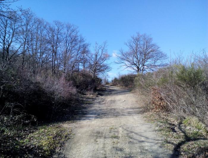 Sentiero 551 LIGNANO