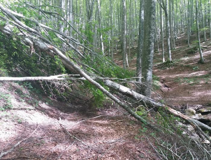 Albero caduto sul sentiero nei pressi di Badia Prataglia