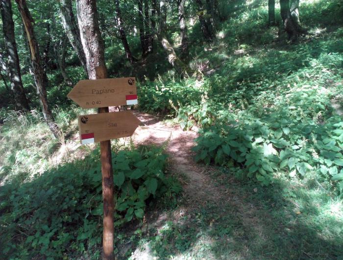 Incrocio tra sentiero 82 e 90 sulle pendici del monte falterona