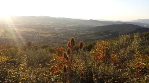 Paesaggio collinare di Olmo