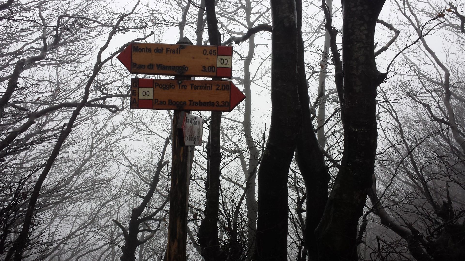 Incrocio CAI 8 - CAI 00 - Alpe della Luna