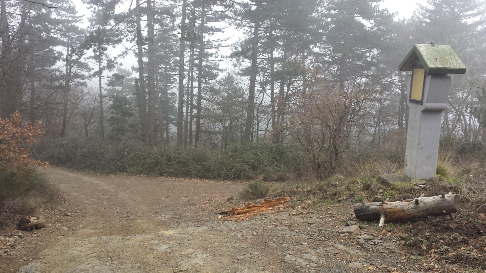 Incrocio tra sentiero CAI 551 e strada forestale per Lignano